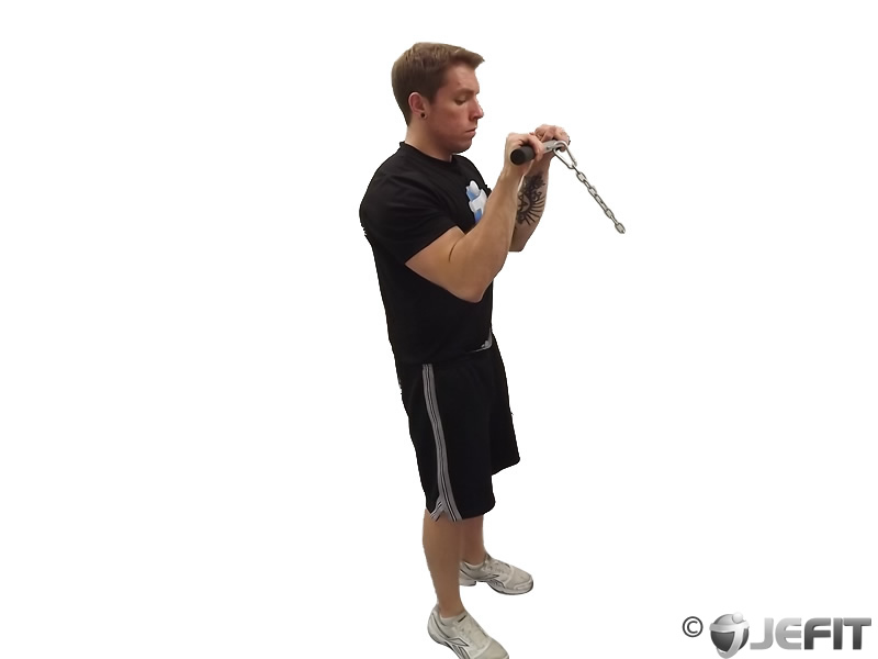 Rope Pulley Curls : Cable reverse curl exercise database jefit best