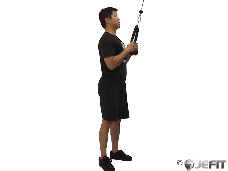 cable rope triceps pushdown   exercise database jefit   best android