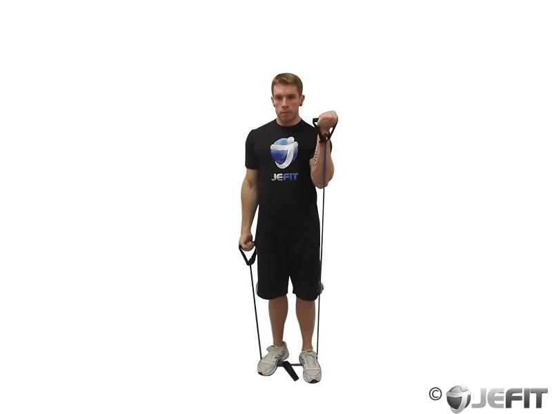 Band Speed Alternating Biceps Curl Exercise Database