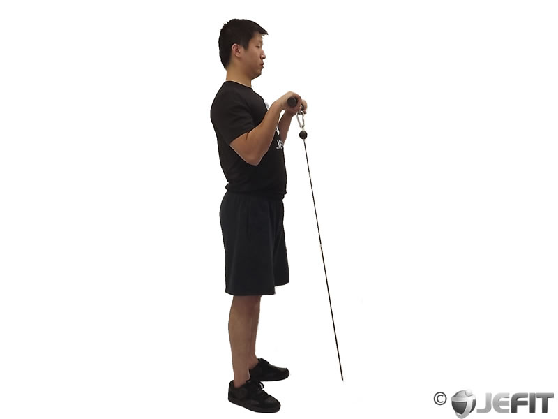 cable reverse grip curls exercise database jefit