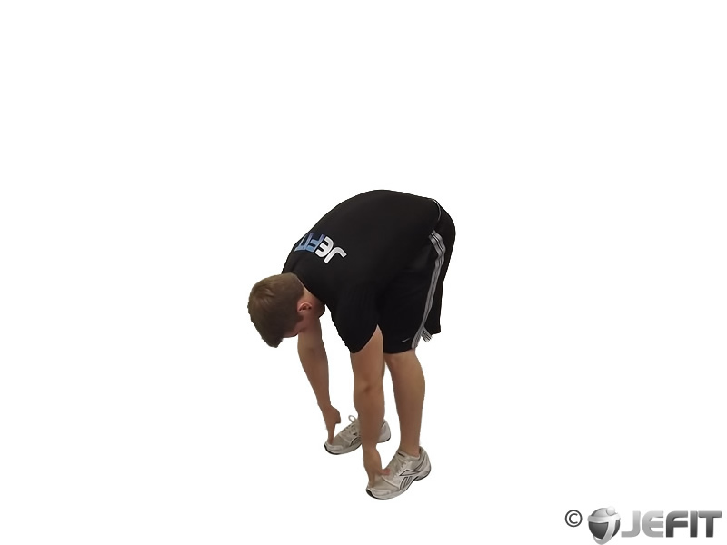 Standing Toe Touches Exercise Database Jefit Best