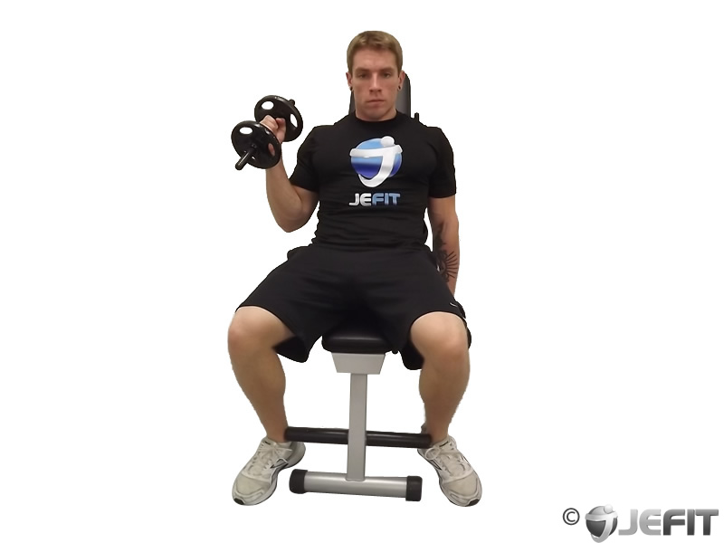 Dumbbell One Arm Seated Hammer Curl Exercise Database