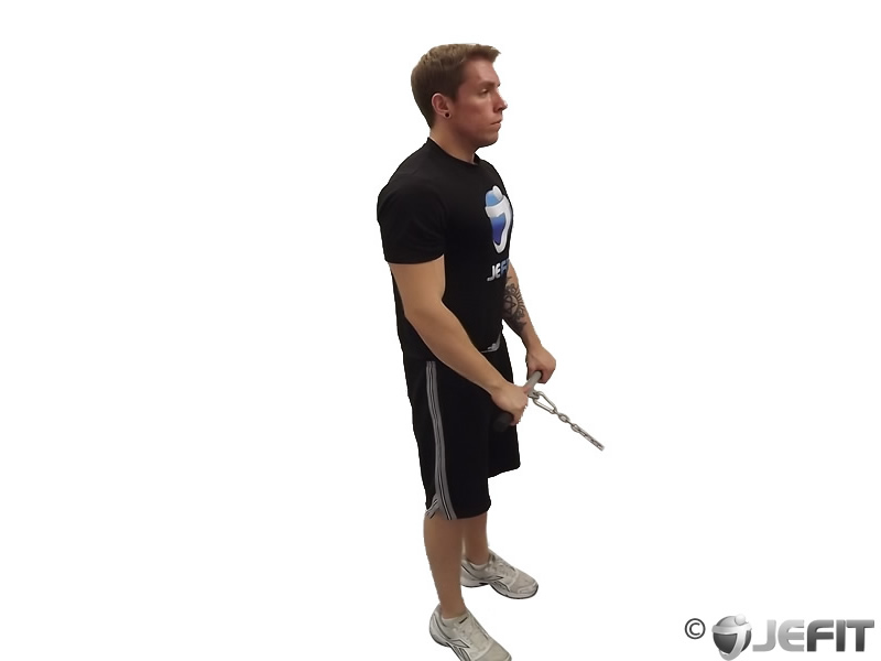Cable Reverse Grip Curl