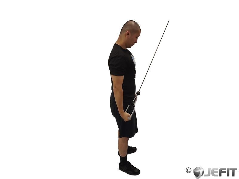 Triceps (triceps brachii) Exercise Database & Workout ...