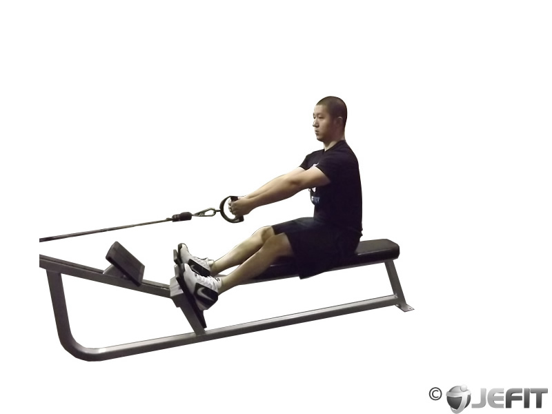 Cable Seated Row - Exercise Database