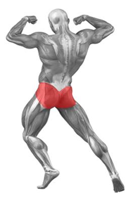 Kneeling Squat Exercise Database Jefit Best Android